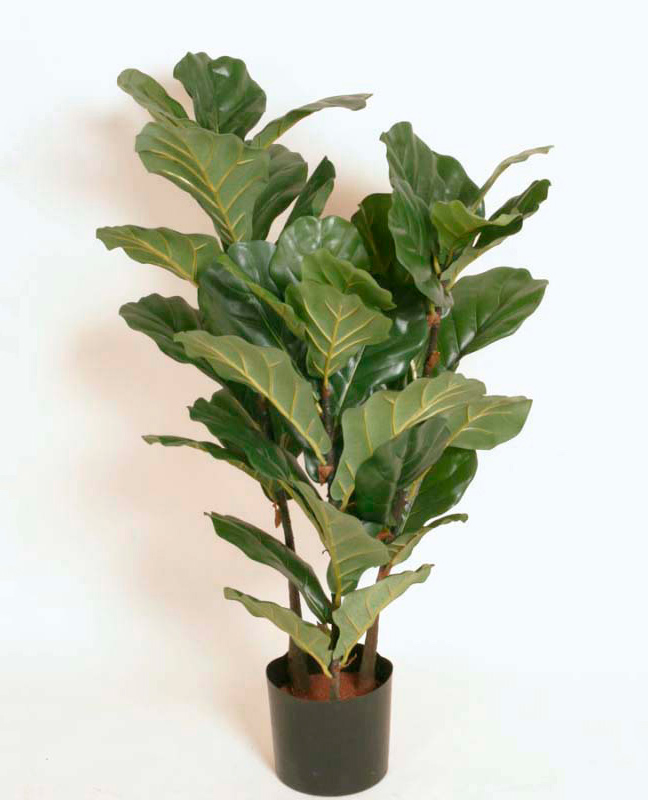 1233-100 Fiddle Leaves 100cm, 1233-140 Fiddle Leave 140cm