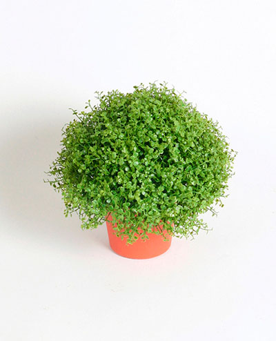 5869 Honey Moss Potted 20cm